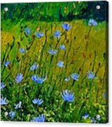 Wild Flowers 911 Acrylic Print
