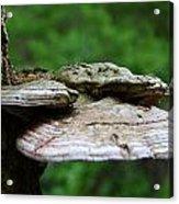 Wild Fungi Acrylic Print