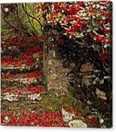 Wild Garden, Rowallane Garden, Co Down Acrylic Print