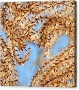 Wild Grasses Against A Blue Sky Acrylic Print