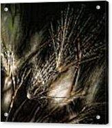 Wild Grasses Acrylic Print