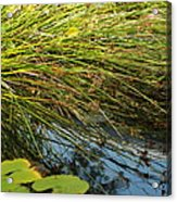 Wild Green Grass And A Blue Pond Acrylic Print