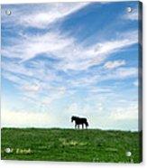 Wild Horse On Grassy Hill Acrylic Print