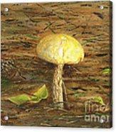 Wild Mushroom On The Forest Floor Acrylic Print