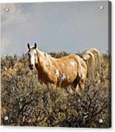 Wild Oregon Horse Acrylic Print