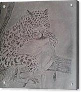 Wild Predator Acrylic Print