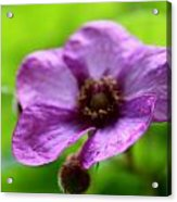 Wild Purples Acrylic Print