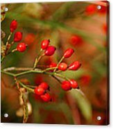Wild Red Berry Reflections Acrylic Print