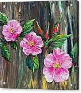 Wild Roses 09 Acrylic Print