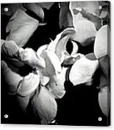 Wild Roses In Black And White Acrylic Print