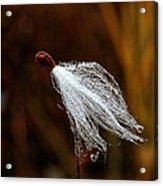 Wild Seed Acrylic Print
