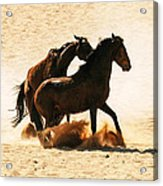 Wild Stallion Clash 3 Acrylic Print