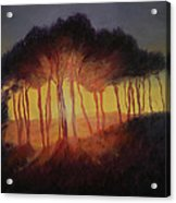 Wild Trees At Sunset Acrylic Print