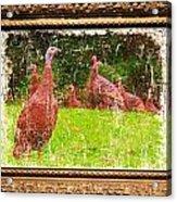 Wild Turkey - 3 Acrylic Print