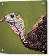 Wild Turkey Portrait Acrylic Print