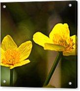 Wild Yellows Acrylic Print