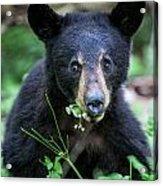 Wildflower Bear Acrylic Print