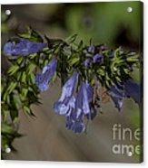 Wildflower Beauty Acrylic Print