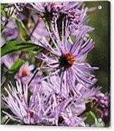 Wildflower Days Acrylic Print