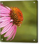 Wildflower Dew Drops Acrylic Print