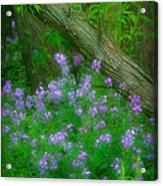 Wildflower Dreams Acrylic Print