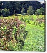 Wildflower Field Afternoon Acrylic Print