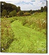 Wildflower Field Morning Acrylic Print