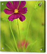 Wildflower Acrylic Print by Image by Rebecca Weaver, RWeaverNest Photography
