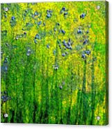 Wildflower Impression By Jrr Acrylic Print by First Star Art
