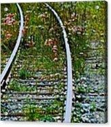 Wildflower Railroad Acrylic Print