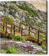 Wildflower Steps Acrylic Print