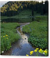 Wildflower Stream Acrylic Print