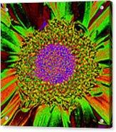 Wildflower Tutu Acrylic Print
