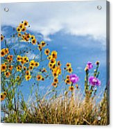 Wildflower Weed Acrylic Print by Tamyra Ayles