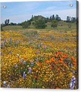 Wildflower Wonderland 8 Acrylic Print
