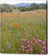 Wildflower Wonderland 6 Acrylic Print