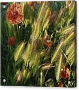 Wildflowers And Grass Tufts In Provence Acrylic Print