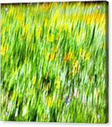 Wildflowers And Wind Acrylic Print