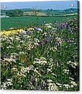 Wildflowers, Near Seaforde, Co Down Acrylic Print