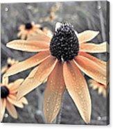 Wildflowers Of Ontario Acrylic Print