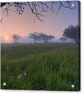 Wildflowers On A Foggy Pasture Acrylic Print