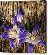 Wildflowers On Wood Acrylic Print