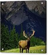 Wildlife In The Mountains Acrylic Print