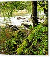 Williams River Acrylic Print by Thomas R Fletcher