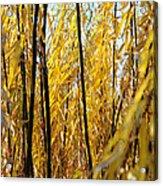 Willow Curtain Acrylic Print