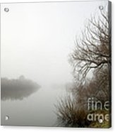 Willow In Fog Acrylic Print by David Lade