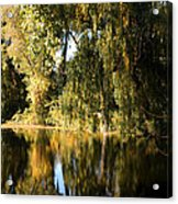Willow Mirror Acrylic Print