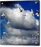 Wind Sailing Seagulls Acrylic Print by Vicki Ferrari