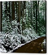 Winding Forest Trail In Winter Snow Acrylic Print