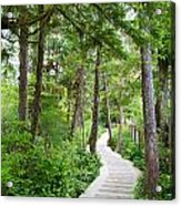 Winding Path Acrylic Print by Ivan SABO